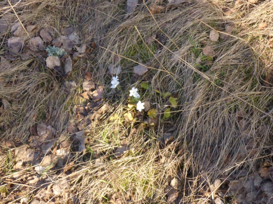 Våren har kommit en bit här nu.