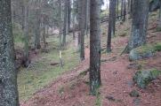 Den fina trollskogen där jag gjorde mitt för dagen andra fall.