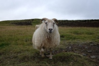 Och längs med forsen Skoga så hittade vi den här nyfikna kompisen, Lambert!